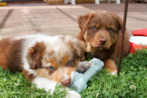 2 of the 47 cute puppies